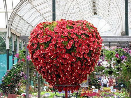 L 39 anthurium flore de l le de la r union for Plantas de interior anturio