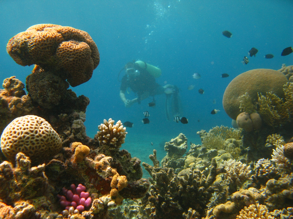 All abut jordan all you wanna know abut jordan here for Aqaba dive
