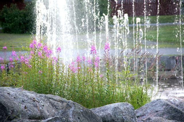 Lehtipihvit kukkakaalisalaatilla