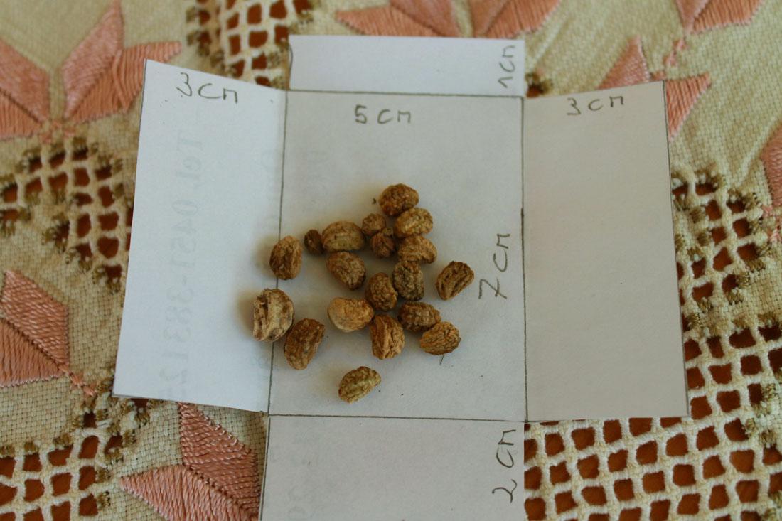 Bustine di carta per semi