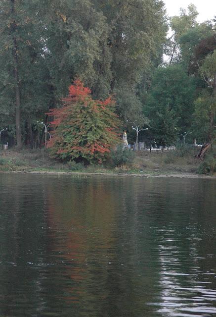Фото Виталия Бабенко: осенняя листва