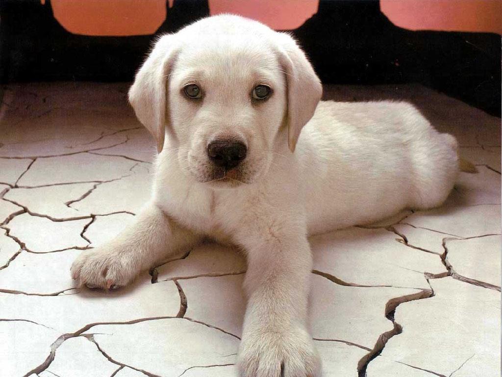 http://4.bp.blogspot.com/-f9YUep6L0ts/TgnaU80dGuI/AAAAAAAAI2E/tDFj890Vpc8/s1600/dog_wallpaper.jpg