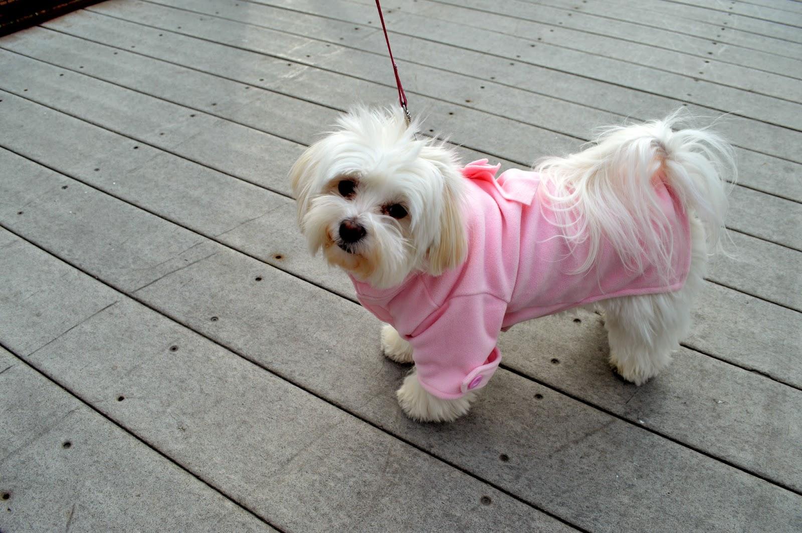 Ella-morkie-pink-dog-coat