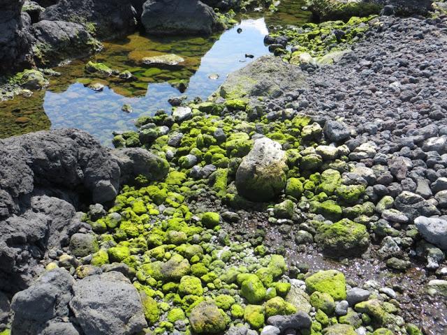Fonte das Pombas zona balnear dos Biscoitos, pedras, musgo e água