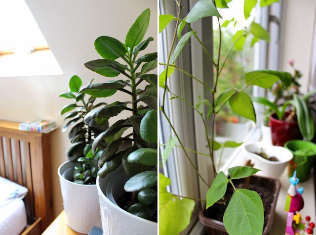 growing-plants-window-garden-todaymywayblog