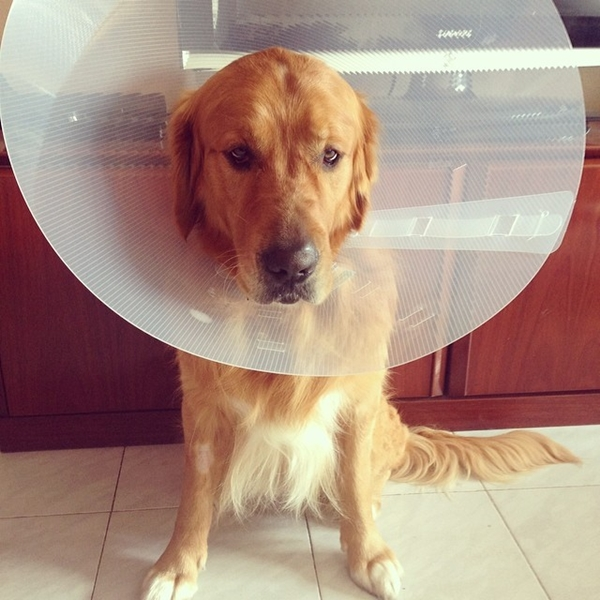cachorro dopado com cone