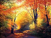 #8 Autumn Wallpaper