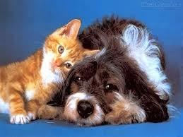 Cães e gatos felizes!