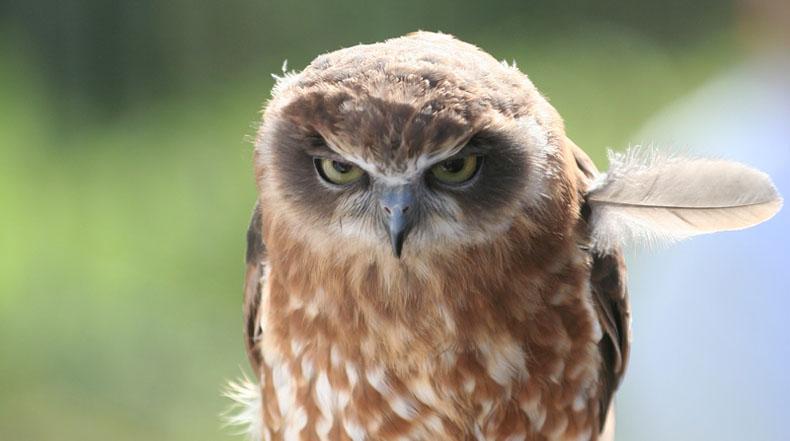 Imagen del día: Angry Bird