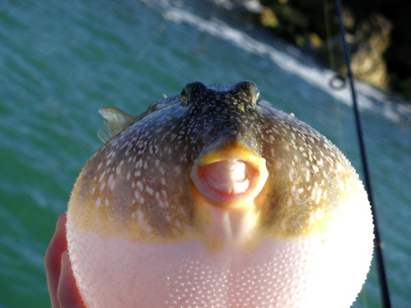 Những chú cá dễ thương