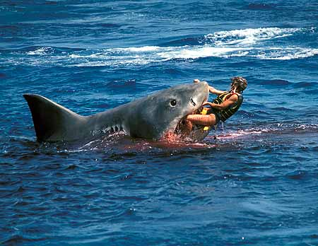 shark attack thailand