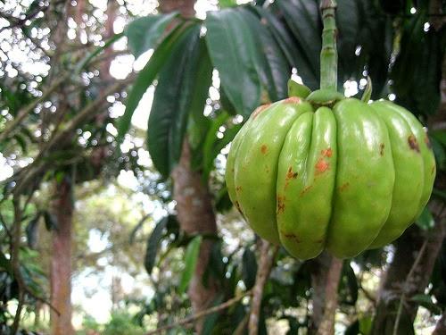 de una fruta que se encuentra en africa muy famosa en el mundo medical ...