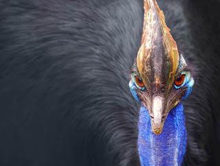 طائر جميل وخجول طبعه