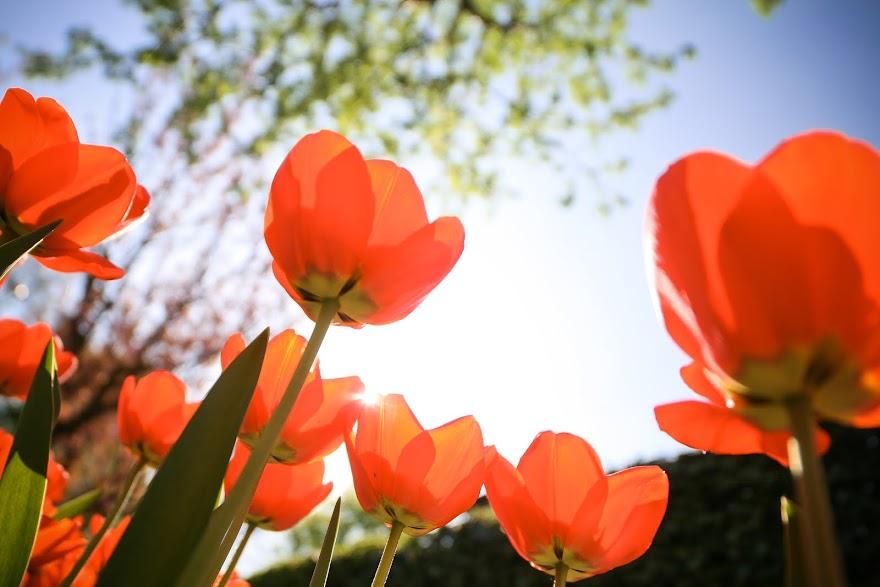 Primavera en el hemisferio norte