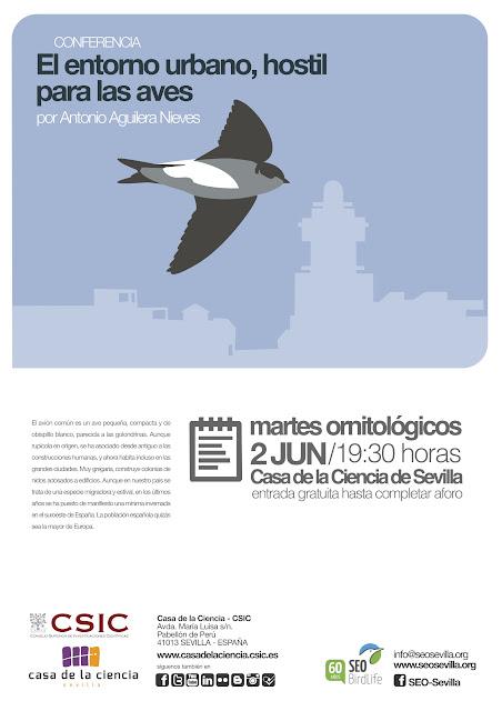 """Conferencia ornitológica organizada por el Grupo Local SEO-Sevilla de SEO/BirdLife en el museo Casa de la Ciencia de Sevilla. """"El entorno urbano, hostil para las aves. El caso del avión común en Isla Cristina"""".  Por Antonio Aguilera Nieves."""