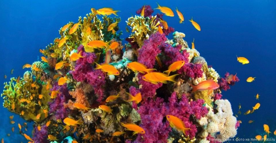 the characteristics of the coral reef habitats What is a coral reef ecological balance of the reef as well as having indirect impacts on other nearby habitats characteristics of calcium.