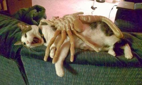 cat alien randommusings.filminspector.com