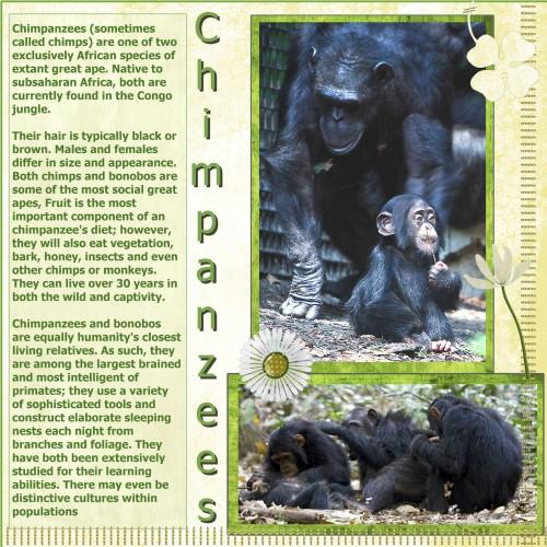 March.2016. C= for Chimpanzees (Custom)