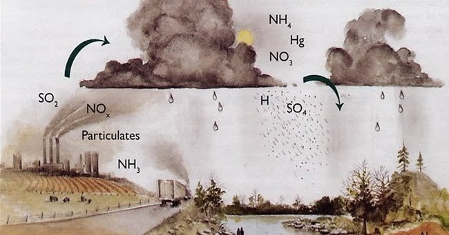 the negative effects of acid rain water Acid rain is one of the best known examples of human influence on the ph of water any form of precipitation with a ph level less than 50 is known as acid rain ²¹ this precipitation comes from the reaction of water with nitrogen oxides, sulfur oxides and other acidic compounds, lowering its already slightly acidic ph.