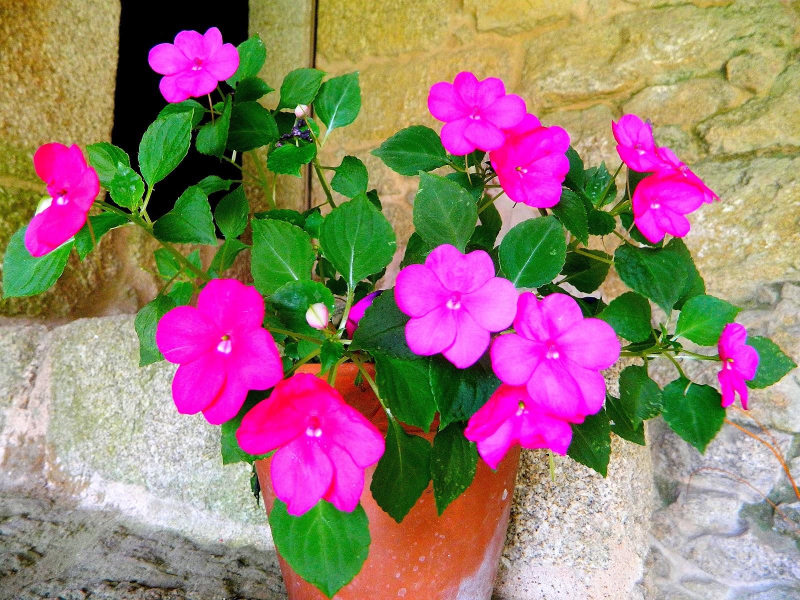 En este jard n de invierno tambi n hay flores en verano paperblog - La casa de la alegria ...