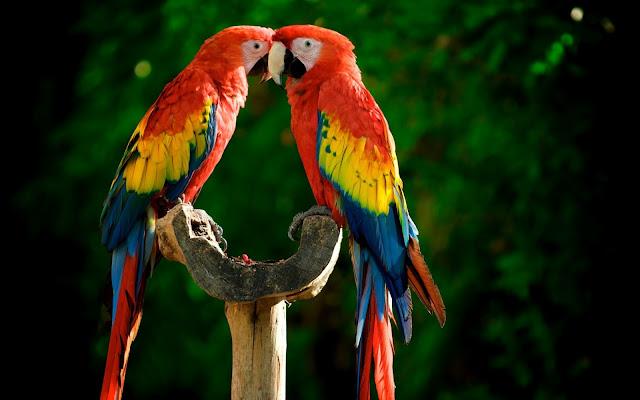 Loros y Cotorras Aves Exoticas en la Naturaleza