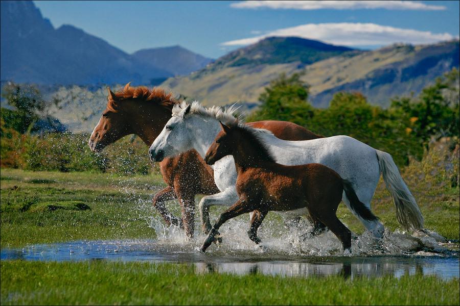 animals horse running free - photo #19