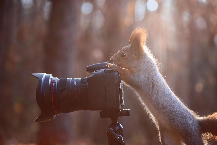 حيوانات تعشق التصوير