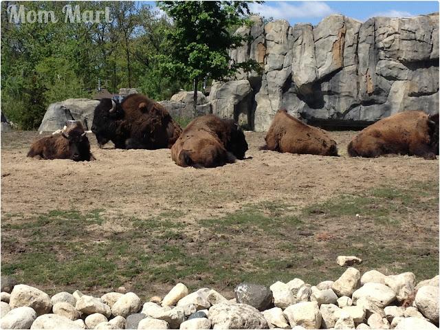 the Brookfield Zoo