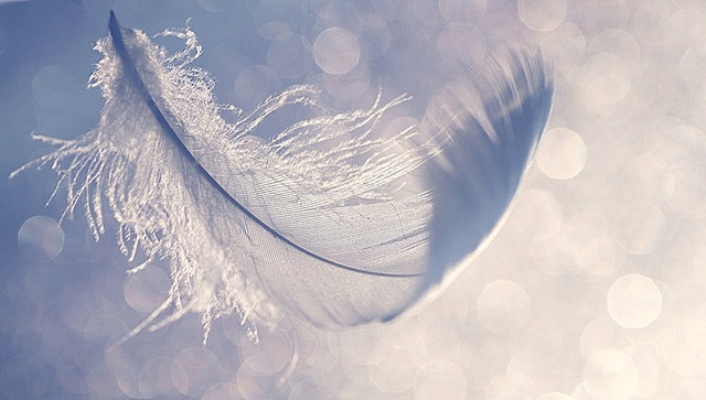 feather image, feather floating, hope, sandy hook support,