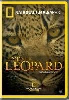 Mắt Loài Báo - Eye Of The Leopard