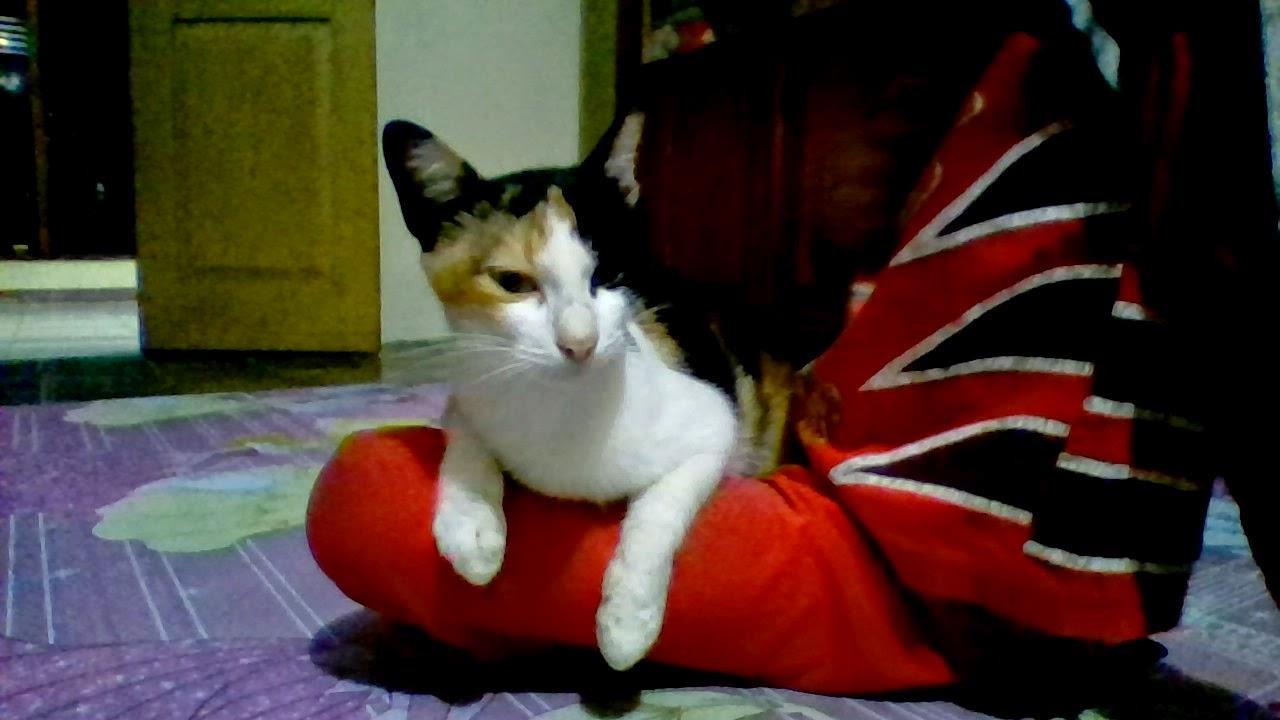Kucingku Namanya Puss
