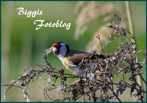 http://biggisfotoblog.blogspot.de