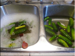 washing pickling cucumbers