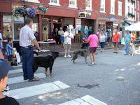Dog 2BDays 2B2011 2B001
