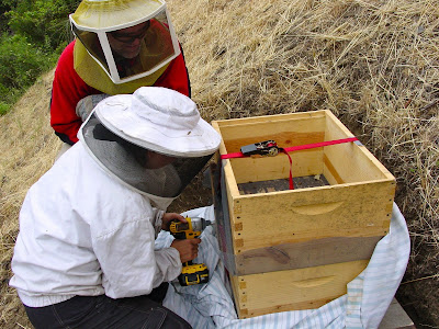 backwards beekeepers