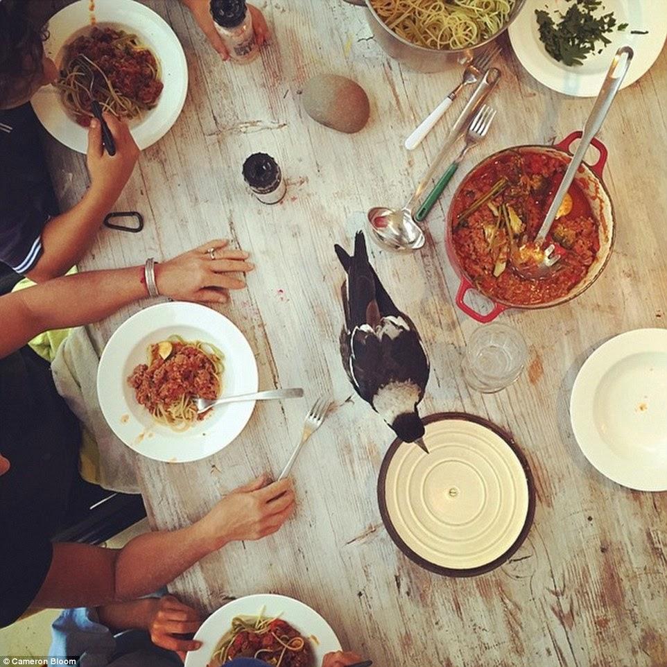 يأكل الغراب على الطاولة مع العائلة