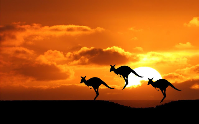 Three Kangaroos