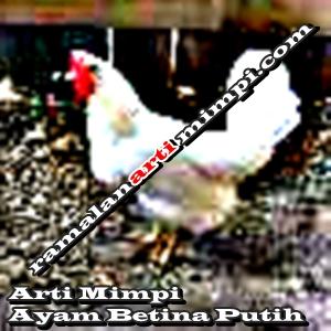 Arti Mimpi Ayam Betina Putih