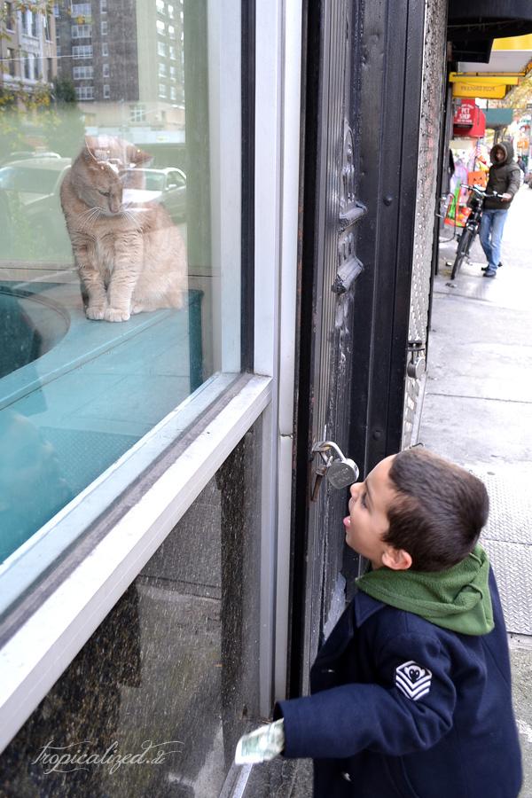 New York November 2012 Katze Schaufenster Junge