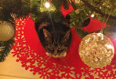 Suzi the cat under the Christmas tree