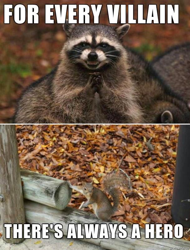 30 Funny animal captions - part 24 (30 pics), animal pictures with funny captions, funny animals, funny captions
