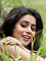 Poorna, hot, pics, from, chattakkari