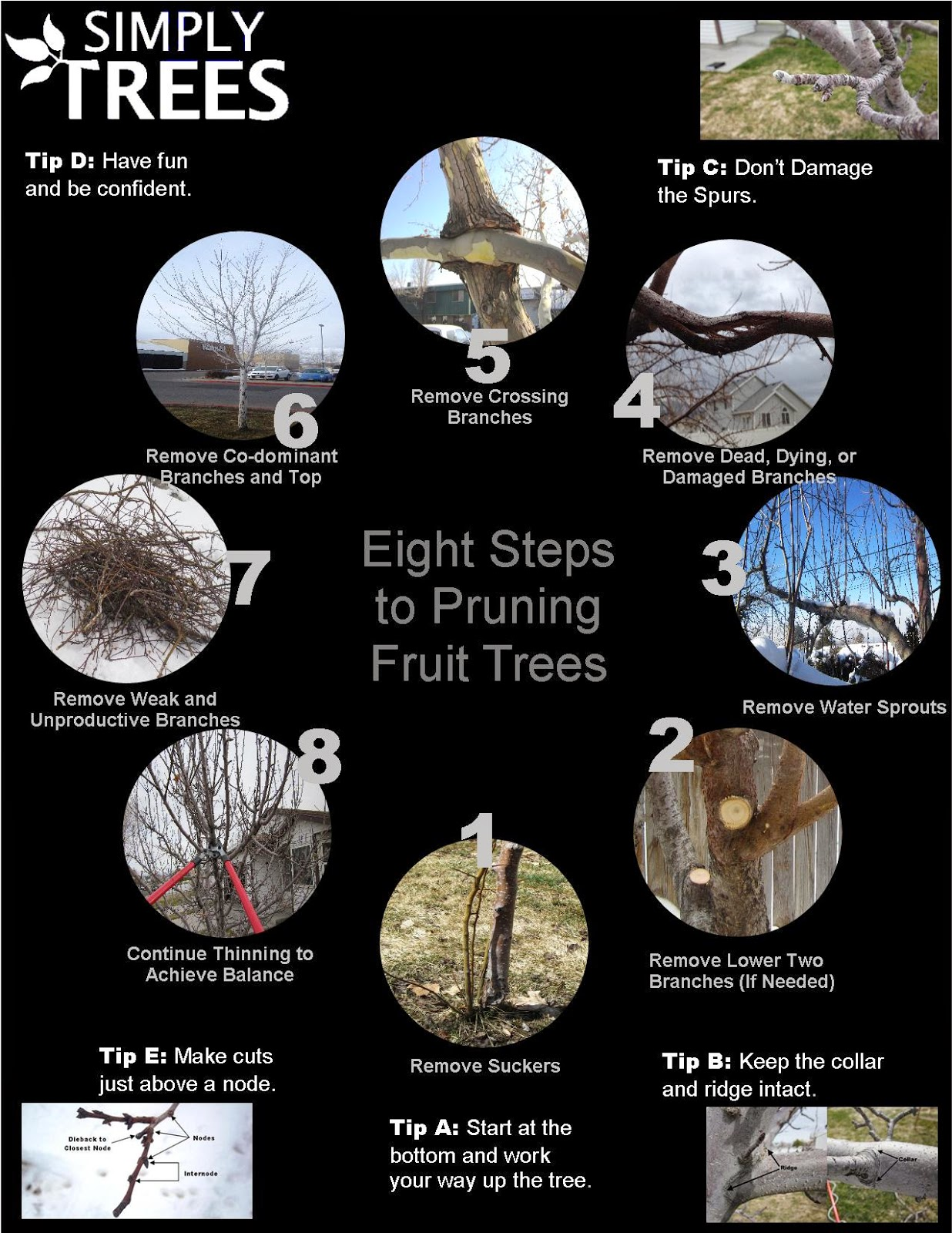 Fruit tree pruning at its best eight steps to pruning fruit trees - Fruit trees every type weather area ...