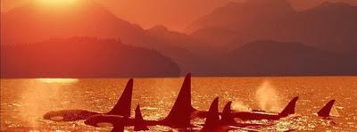 Couverture facebook vie baleine