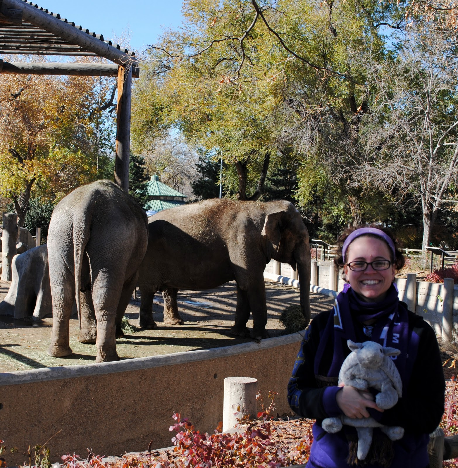 Claire The Armadillo: Denver Zoo, Part Two: Elephants And