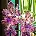 cabaran 30 hari di Hari ke 29 | Orkid Bunga Kegemaran