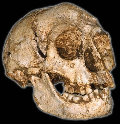 3½ feet tall Hobbit-Like Human Ancestor (Homo Floresienses) found in Asia
