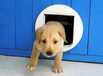 Aprenda c mo hacer puertas para mascotas tips de belleza for Puerta para perros
