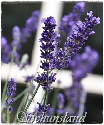 Mijn tuinblog