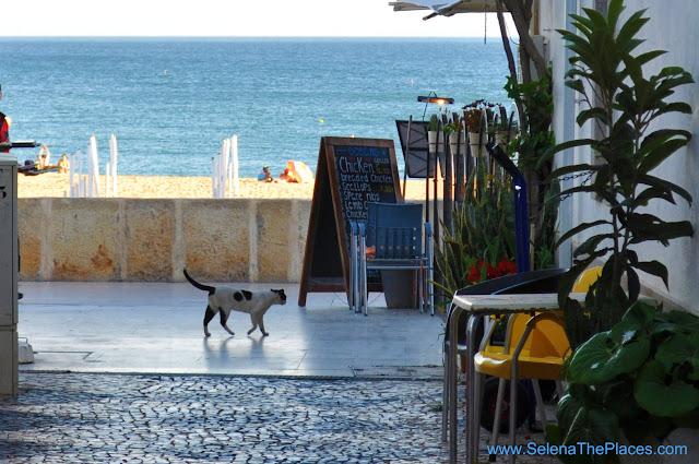 Cat Old Town Albufeira Algarve Portugal